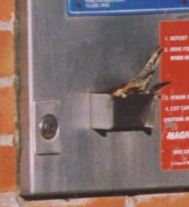 birdenteringmachine