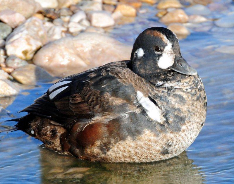 Feature Article -- Bird Chick Photos - photo#33